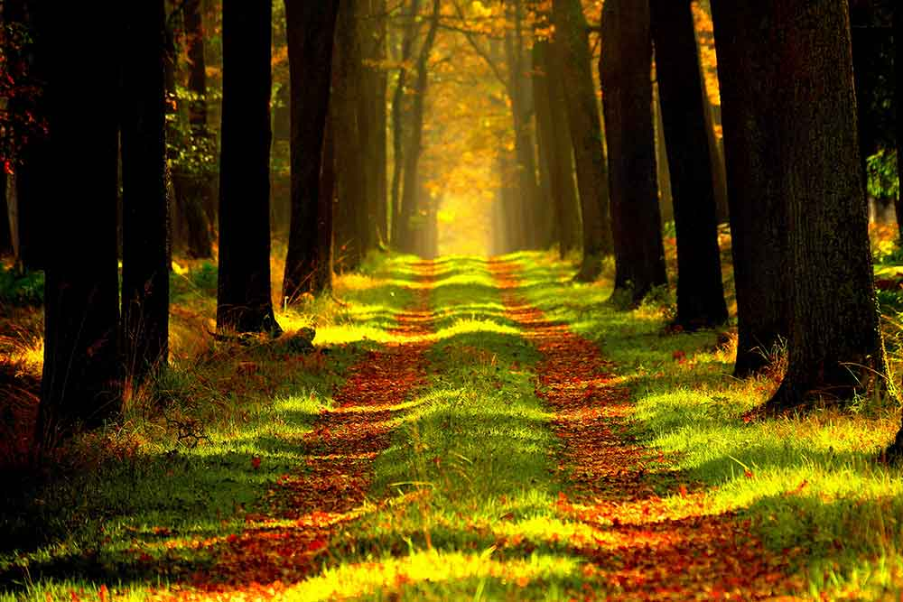 Waldwertermittlungsrichtlinien (WaldR)