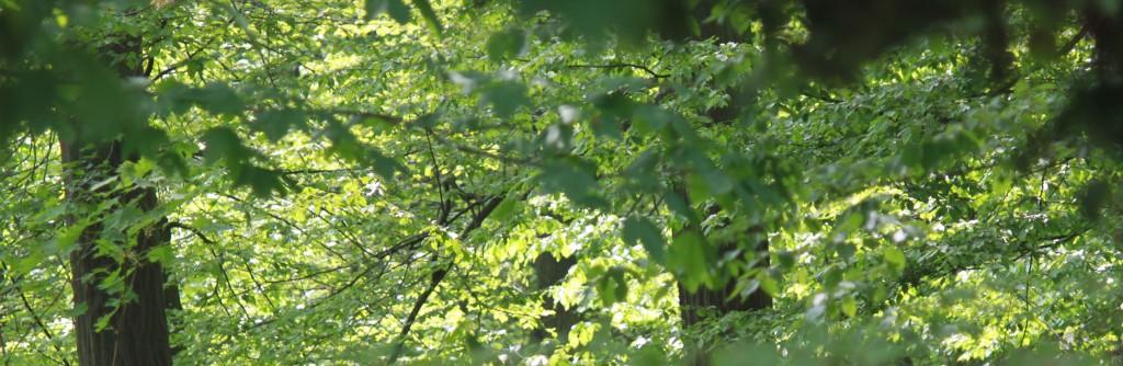 Waldbewertung / Forstbewertung