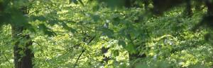 Wald Bernd. A. Binder Gutachter und Sachverständiger