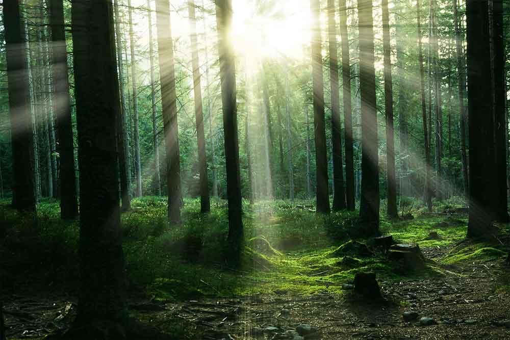 Bannwaldgebiet Sachverständiger und Gutachter für Immobilien Bernd A. Binder